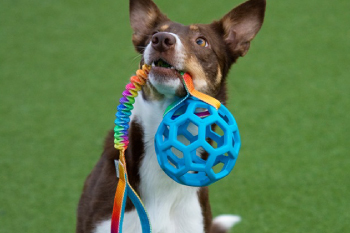Dogs craft Hollee basic ball bungee Dog toy
